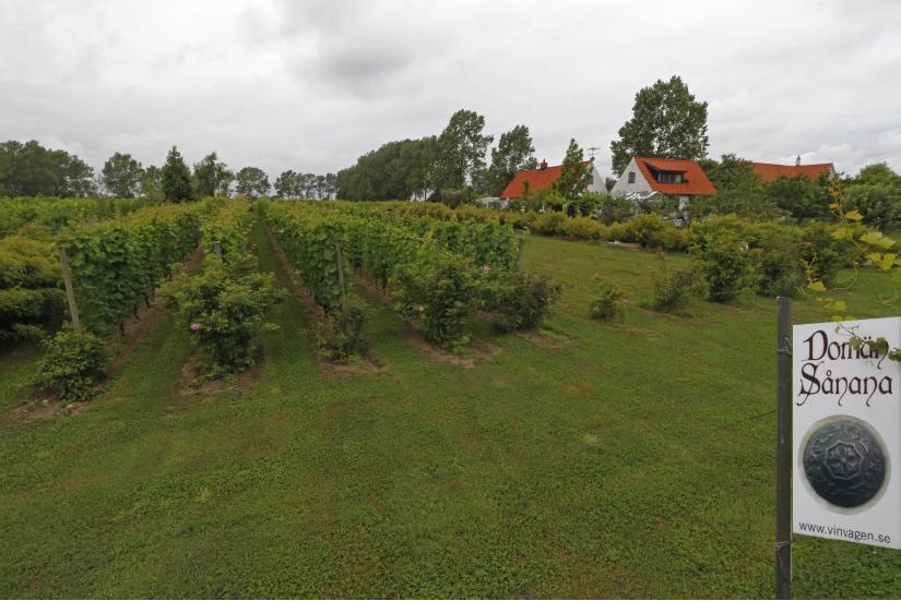 Både bostad och vineri ligger vackert mitt inne i vingården